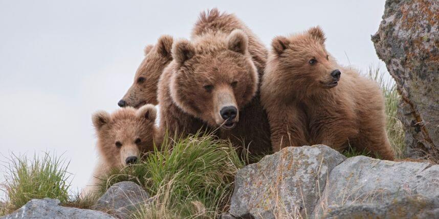 Terre-des-ours-photo